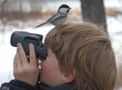 birdwatching at obed   obed wild amp scenic river u s