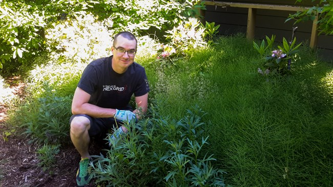 Man weeding horsetail