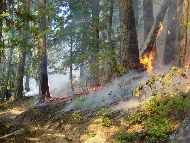 Deer Park Prescribed Fire