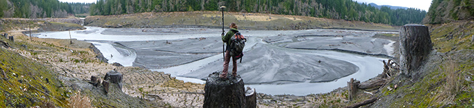 A scientist stands on a tree stump on the bank of the Elwha River.