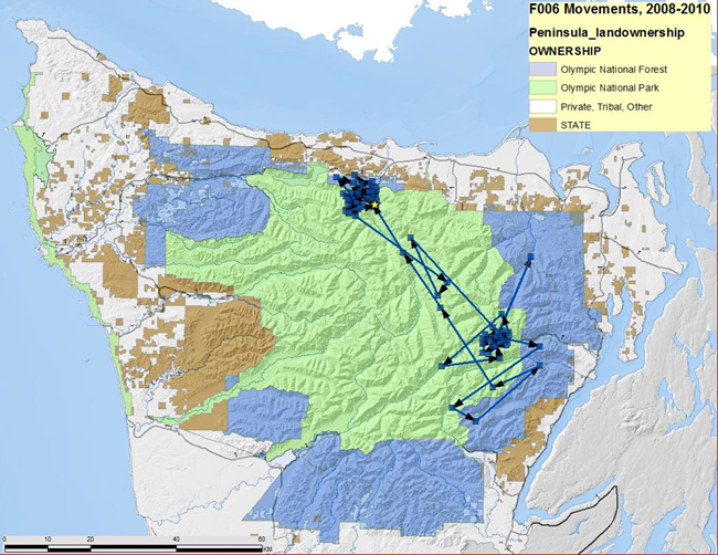 A map of the Olympic Peninsula shows the movements of F006, who traveled back and forth between Lake Crescent at Staircase.