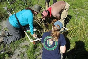 Staff and volunteers monitor a vegetation plot in former Lake Mills.
