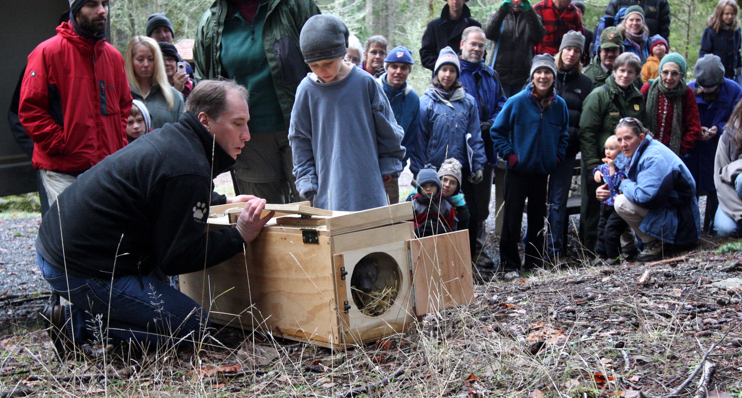 A fisher is released in Olympic National Park.