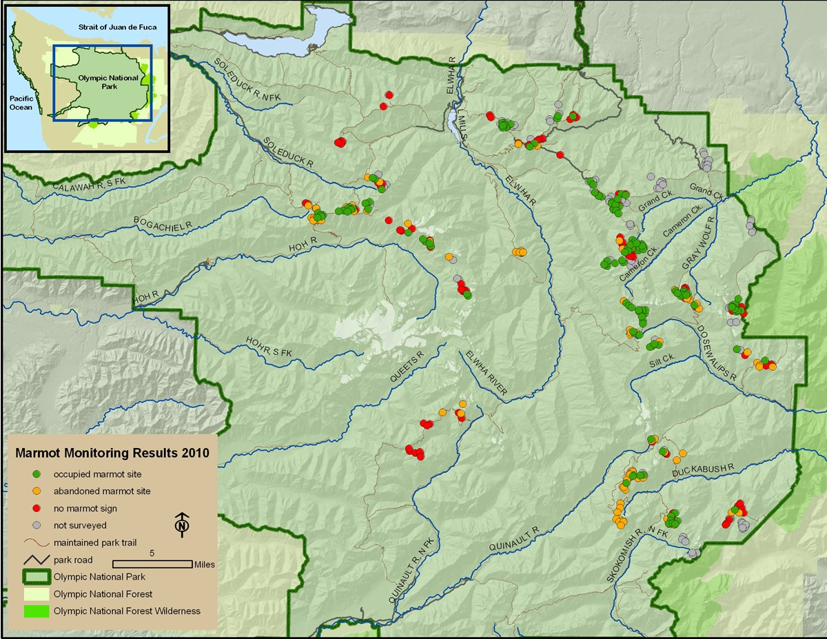 Map of Olympic National Park with marmot survey area results