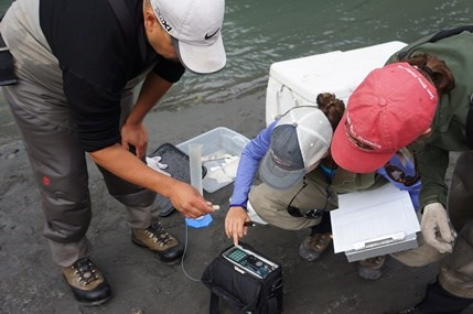 Testing a radio tag before it is attached to a Chinook salmon.