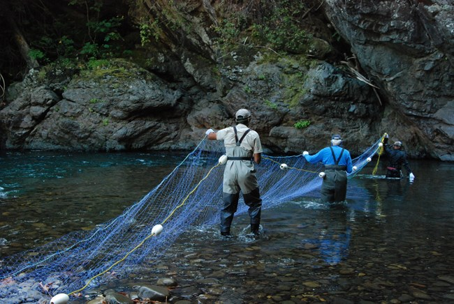Fisheries biologists setting a sampling net on the Elwha River.