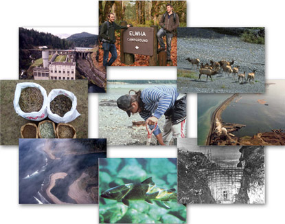 Collage of the various aspects of the Elwha Ecosystem Restoration