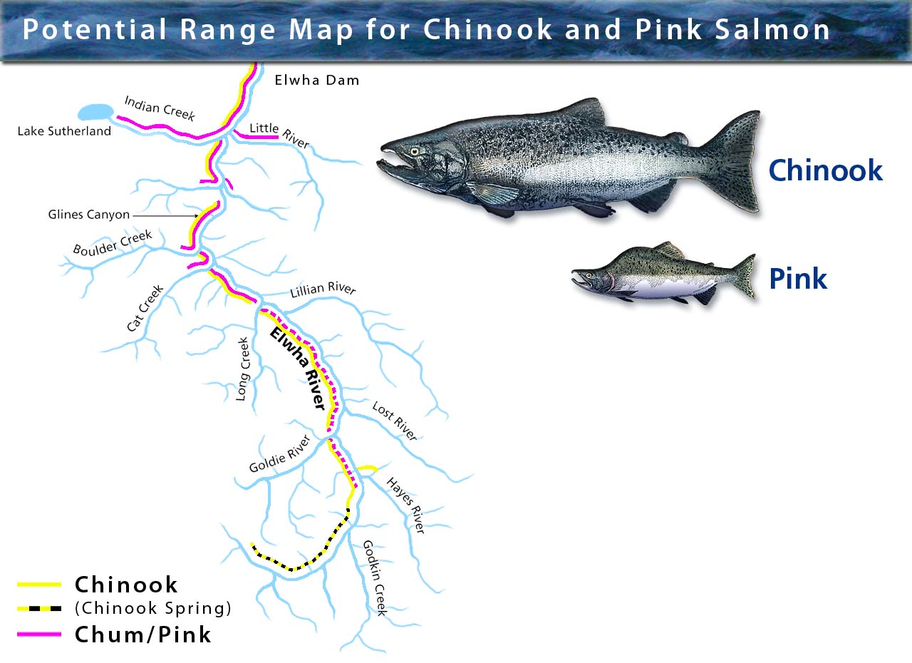 Pink and Chinook Range Map