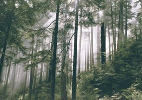 beams of sunlight penetrate fog on dense forested slope