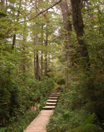 Dense shrubs and trees crowd a boardwalk trail with steps