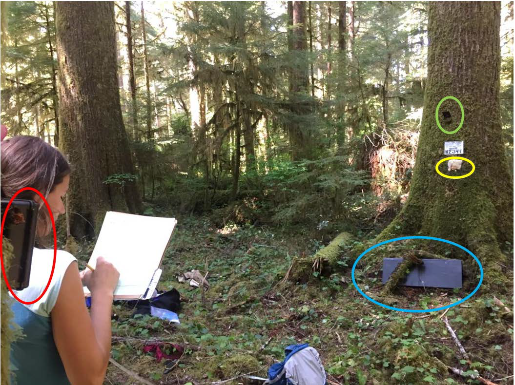 Field-crew member setting up a station within Olympic National Forest. Note camera on left of frame is pointing to tree bait and baited cubby box on the right of the frame.