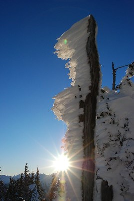Rime ice creates lines of white frost jutting off a brown stick with the sun and blue sky behind it