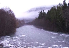 Dark forest lines banks of rushing river with fog bank in back.