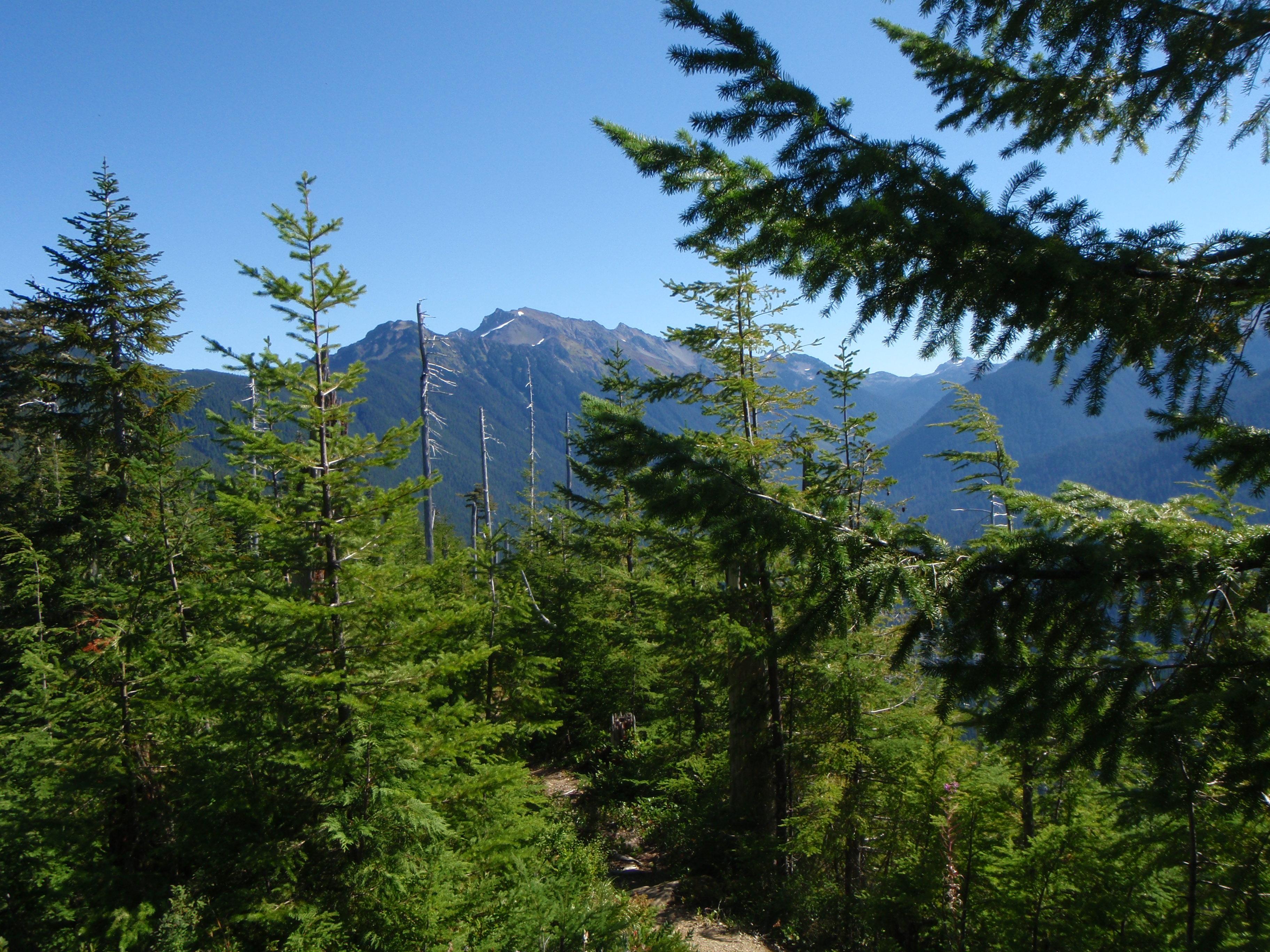 Evergreen trees stock image. Image of hilly, peaks, blue ... |Washington Evergreen Trees