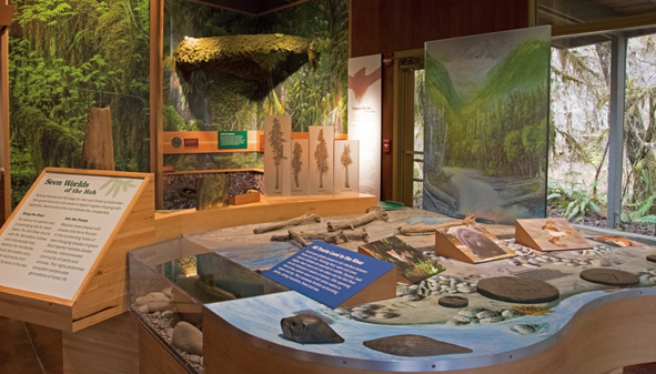 Hands-on exhibits in the Hoh Rain Forest Visitor Center