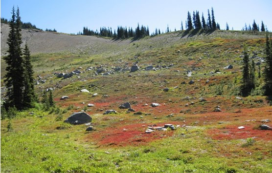 rocky meadow with patches of bright red vegetation
