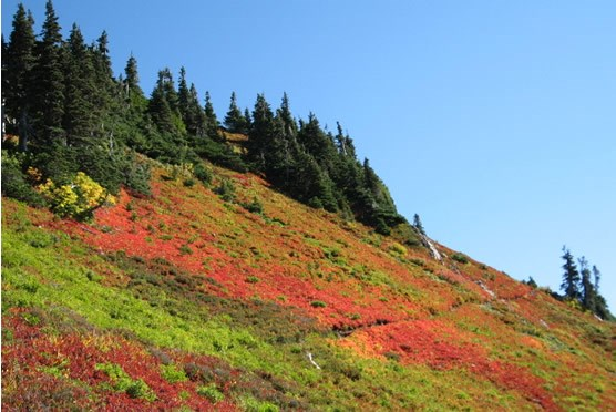 red, orange and green colors on mountain meadow