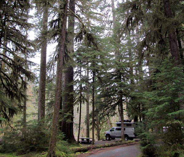 camper van among tall trees