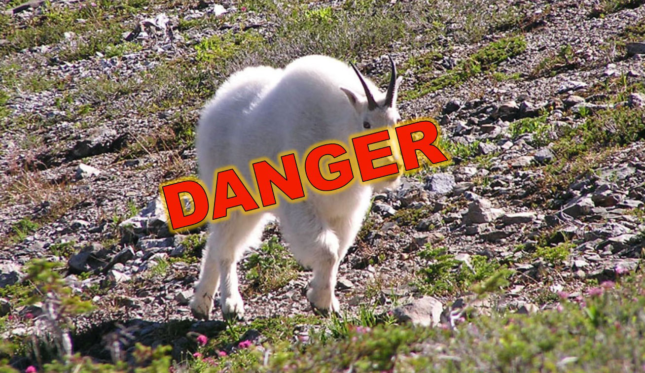 mountain goat with red danger text across it