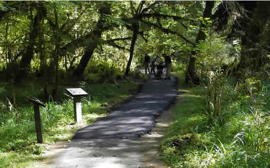 paved trail through forest with workers in background