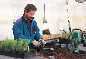 Matt Albright working in park greenhouse
