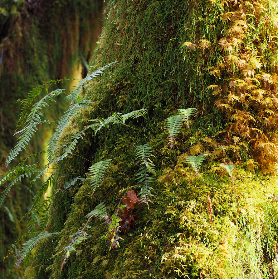 moss and ferns covering a tree trunk
