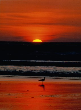 red-orange sunset over ocean with gull on beach in foreground