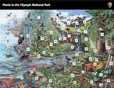 A mural illustration of the park shows the wide variety of animals and plants living in the park.