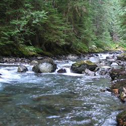 North Fork Skokomish River Trail Olympic National Park