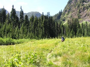 A backpacker walks down a trail through a meadow heading toward a forest with mountains rising up behind the trees.