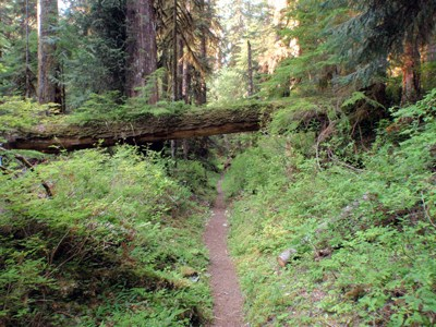 Skokomish River Trail