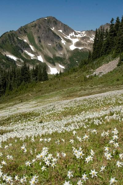Appleton Pass Trail - Olympic National Park (U S  National