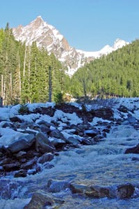 East Fork Quinault River with trees and mountain in background