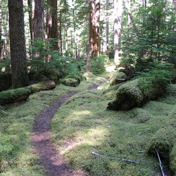 Elwha Old Growth Forest