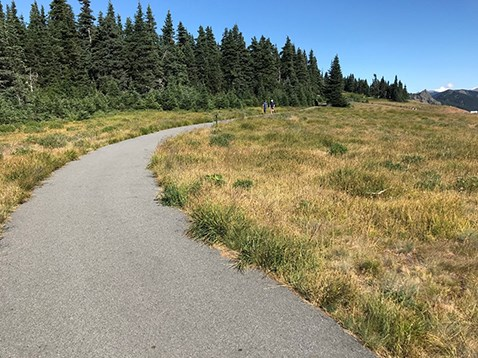 The Big Meadow Trail looking east