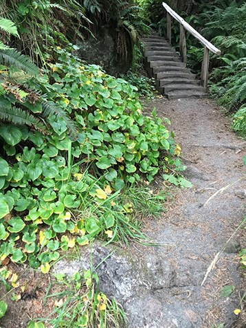 The third staircase and roots across trail
