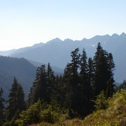 View from Skyline Trail