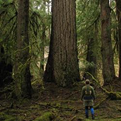 Road Trip Planner >> East Fork Quinault River Trail - Olympic National Park (U.S. National Park Service)