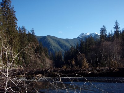 South Fork Hoh River Valley