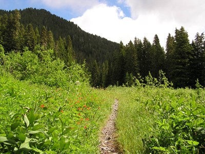 Trail to Ranger Station, Low Divide