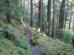 West Fork Dosewallips River Trail Olympic National Park