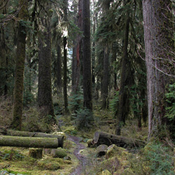 Hoh River Trail Olympic National Park U S National