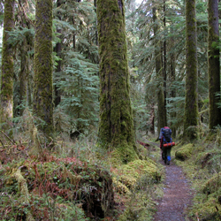 Backpackers in the Hoh Rainforest