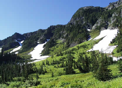 green meadows with clumps of evergreen trees and cliffs with snow patches in background