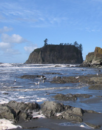 Visiting Kalaloch And Ruby Beach Olympic National Park