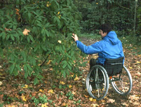 man in wheelchair looking at a rhododendron