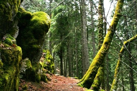 View of the trail and mossy cliffs of Cliff Nature Trail