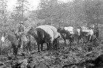 Miners and Pack Mules