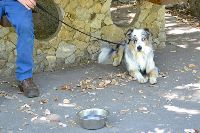 A dog sitting underneath a stone picnic table on a leash next to a bowl of water.