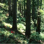 A hike through the redwood forest.